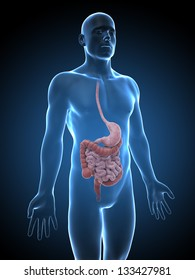 3d rendered illustration of the male digestive system