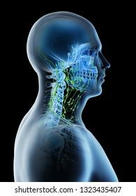 3d rendered illustration of a mans lymph nodes of the neck