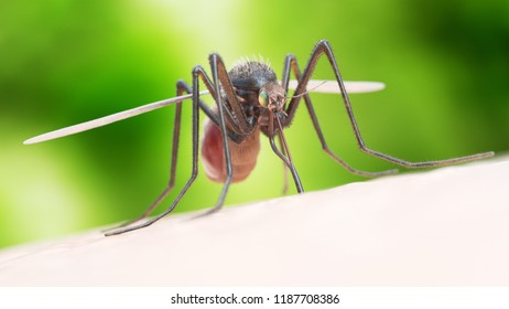3d rendered illustration of a mosquito biting