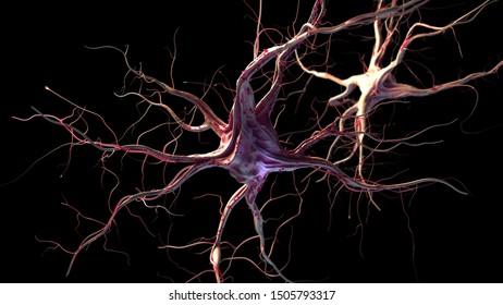 3d rendered illustration of nerve cells