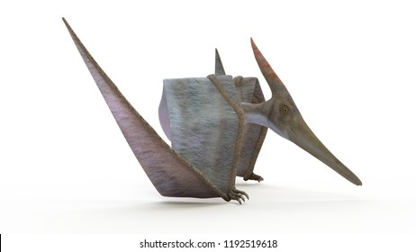 3d rendered illustration of a Pteranodon