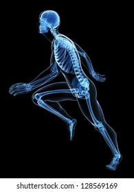 3d rendered illustration - runner anatomy