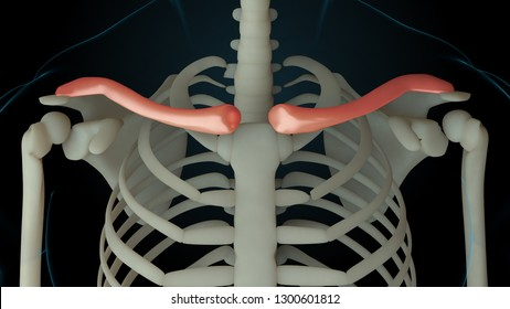 3d rendered illustration of skeleton structure with injured bones. Bone pain is shown by red glow. Pain in collarbone section.