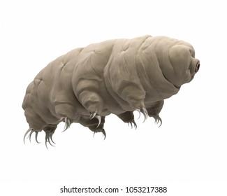 3d rendered illustration of a tardigrade.