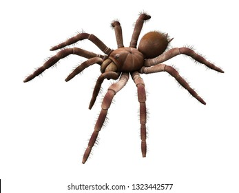 3d rendered illustration of a Theraphosa Blondi