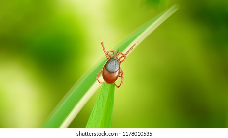 3d rendered illustration of a tick on a grass blade