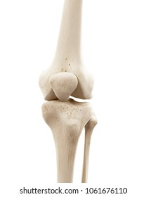 3d rendered medically accurate illustration of the human skeletal knee