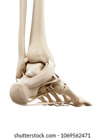 3d rendered medically accurate illustration of the human skeletal ankle