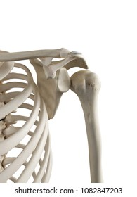 3d rendered, medically accurate illustration of a dislocated shoulder