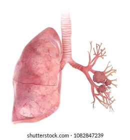 3d rendered, medically accurate illustration of lung cancer