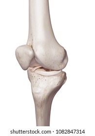 3d rendered, medically accurate illustration of the human knee