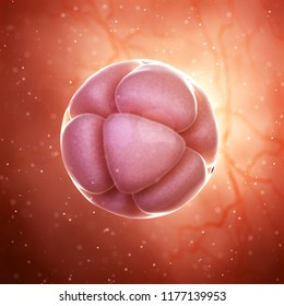 3d rendered medically accurate illustration of a 8 cell stage embryo