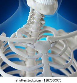 3d rendered medically accurate illustration of the clavicle