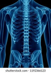 3d rendered medically accurate illustration of a mans skeletal back