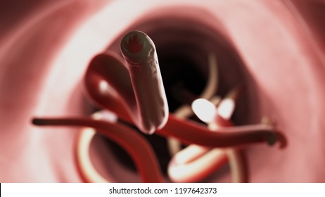 3d rendered medically accurate illustration of a hookworm