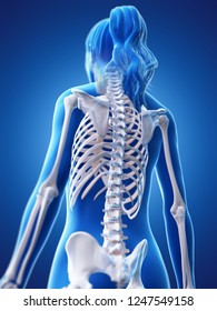 3d rendered medically accurate illustration of a womans skeletal back