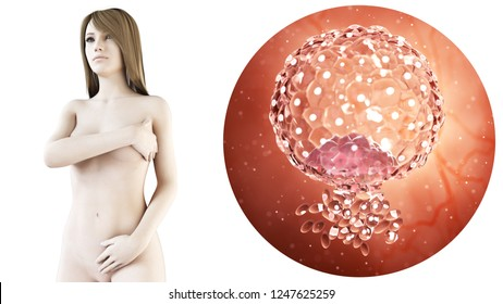 3d rendered medically accurate illustration of a pregnant woman, blastocyst