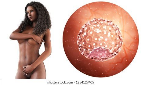 3d rendered medically accurate illustration of a blastocyst