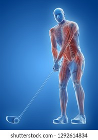 3d rendered medically accurate illustration of the muscles of a golf player