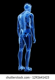 3d rendered medically accurate illustration of the human skeletal system