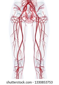 3d rendered medically accurate illustration of the vascular system of a healthy female