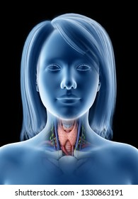 3d rendered medically accurate illustration of a females thyroid gland