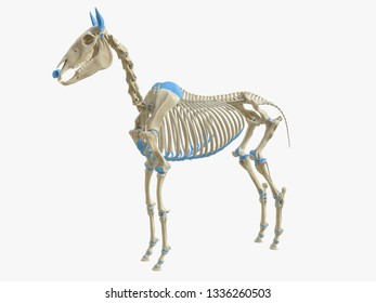 3d rendered medically accurate illustration of the horse skeleton