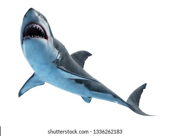 3d rendered medically accurate illustration of a great white shark