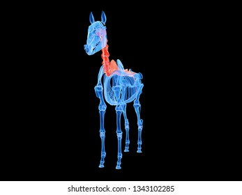 3d rendered medically accurate illustration of a horse spine