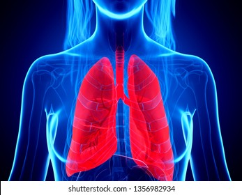 3d rendered medically accurate illustration of a womans lung