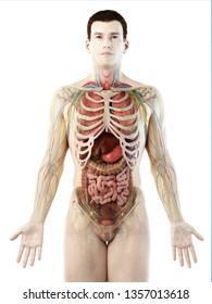 3d rendered medically accurate illustration of a mans internal organs