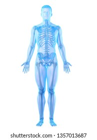 3d rendered medically accurate illustration of a mans skeleton