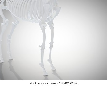 3d rendered medically accurate illustration of the horse skeletal system