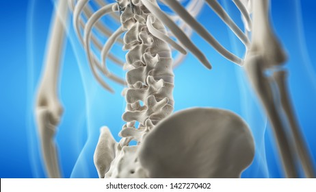 3d rendered medically accurate illustration of the lumbar spine