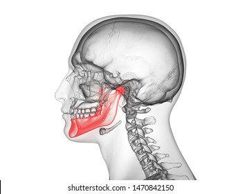3d rendered medically accurate illustration of the jaw bone