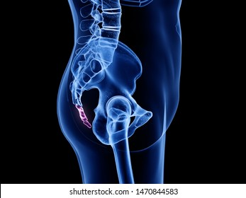3d rendered medically accurate illustration of the coccyx