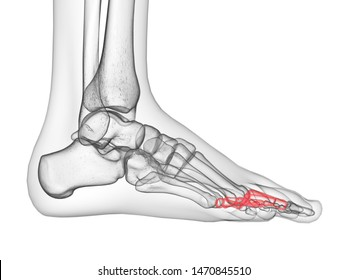 3d rendered medically accurate illustration of the proximal phalanx bone