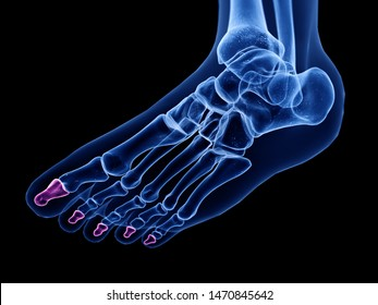 3d rendered medically accurate illustration of the distal phalanx bone