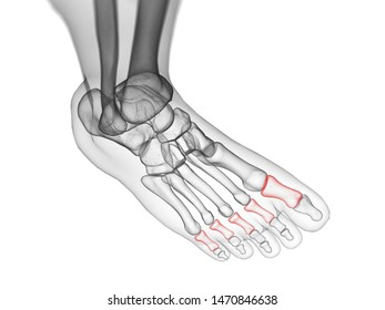 3d rendered medically accurate illustration of the proximal phalanx bones