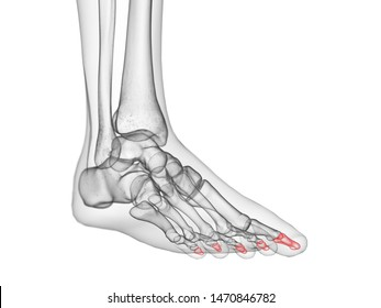 3d rendered medically accurate illustration of the distal phalanx