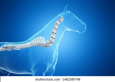 3d rendered medically accurate illustration of a horses spine