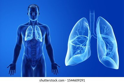 3d rendered medically accurate illustration of the male lung