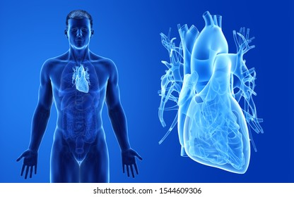 3d rendered medically accurate illustration of the male heart