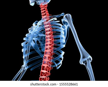 3d rendered medically accurate illustration of a skeleton with painful back spine.