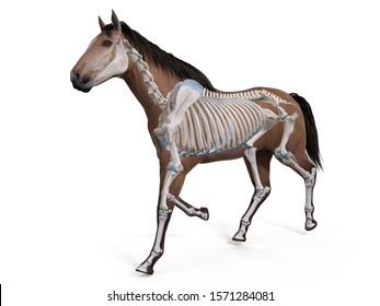 3d rendered medically accurate illustration of the equine anatomy - the skeleton
