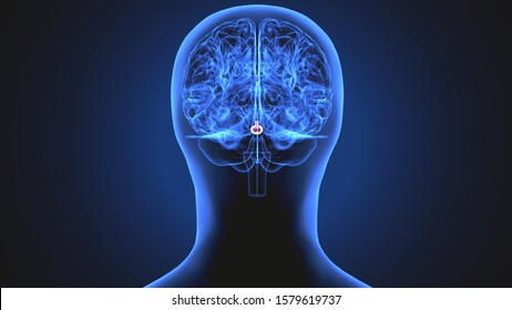 3d rendered medically accurate illustration of the brain anatomy - the hippocampus