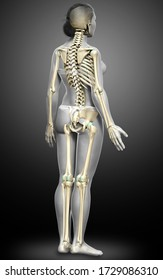 3d rendered, medically accurate illustration of a female skeleton system