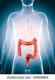3d rendered, medically accurate 3d illustration of the human colon