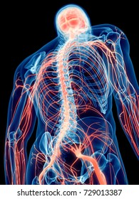 3d rendered medically accurate illustration of the human nerves