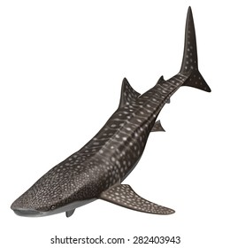 "3D Rendered Rhincodon Typus ""Whale Shark"""